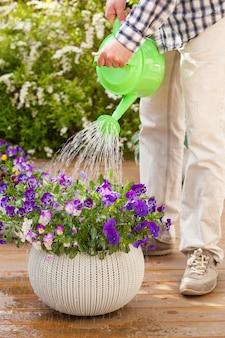 Hombre jardinero regando flores de viola en jardín