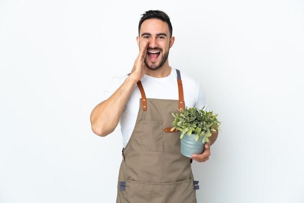 Hombre jardinero sosteniendo una planta aislada en la pared blanca gritando con la boca abierta