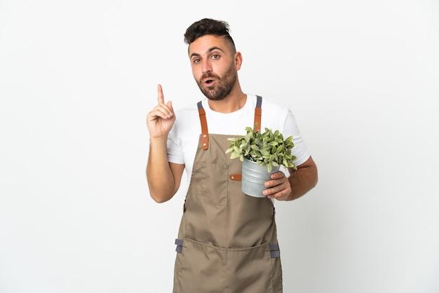 Hombre jardinero sosteniendo una planta sobre blanco aislado con la intención de darse cuenta de la solución mientras levanta un dedo