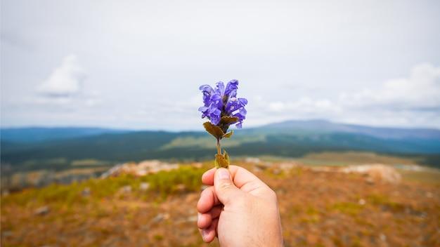 El hombre joven del viajero del primer sostiene en su mano una flor púrpura. fotografías turísticas en las montañas