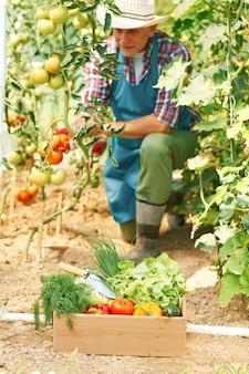 Hombre maduro durante el trabajo en invernadero