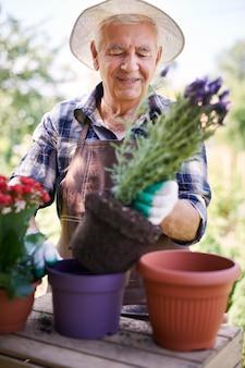 Hombre mayor que trabaja en el campo con flores