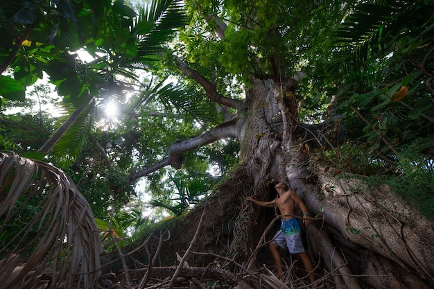 Hombre musculoso de pie mirando el gran árbol gigante en nassau. bahamas