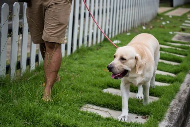 Hombre a pie con perro labrador