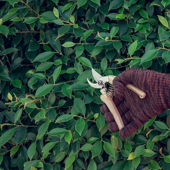 Un hombre poda ramas en el jardín