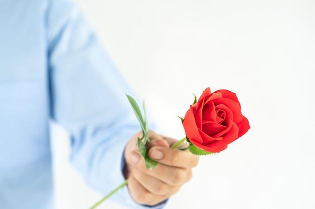 Hombre que sostiene la rosa roja en la mano en blanco