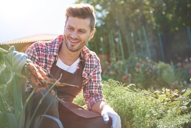 Hombre recogiendo zanahoria orgánica directamente del campo