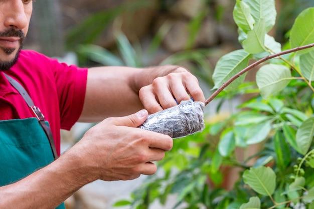 Hombre sujetando un árbol joven y prepárate para plantar en el suelo.