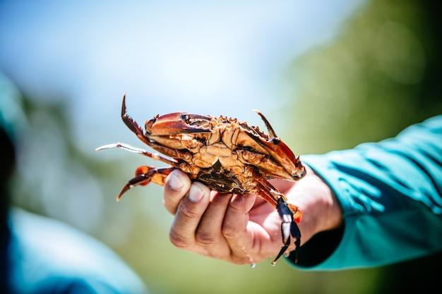 Hombre sujetando un cangrejo de su captura durante el día.