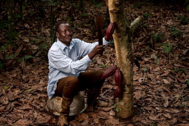 Hombre de tiro completo recogiendo granos de cacao