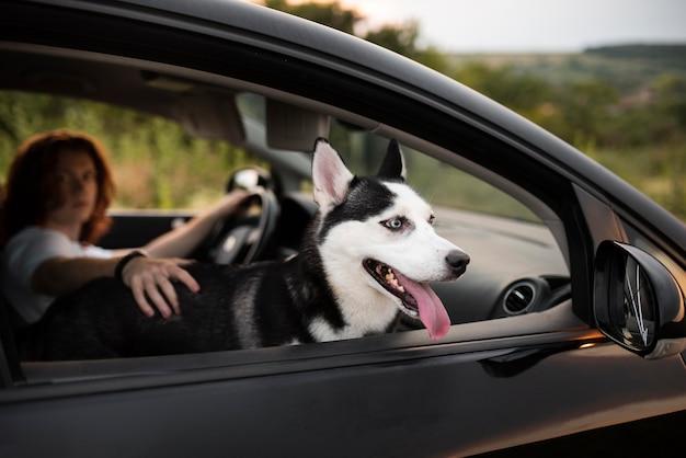 Hombre de tiro medio y perro en coche