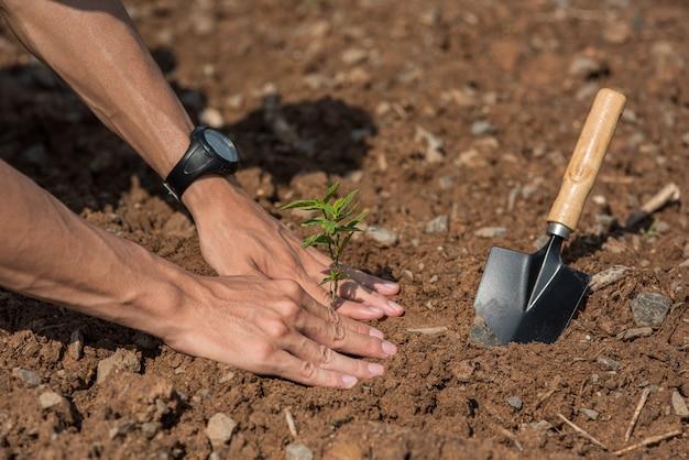 Los hombres plantan árboles en el suelo para conservar la naturaleza.