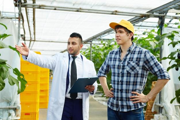 Hombres trabajando en invernadero