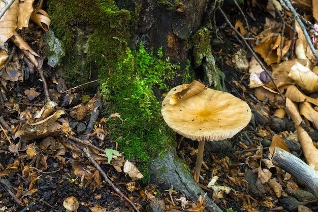 Hongo en el bosque húmedo