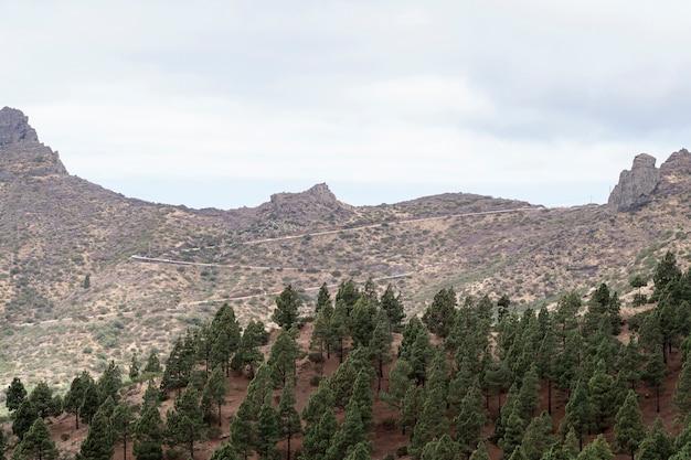 Horizonte de montaña con árboles