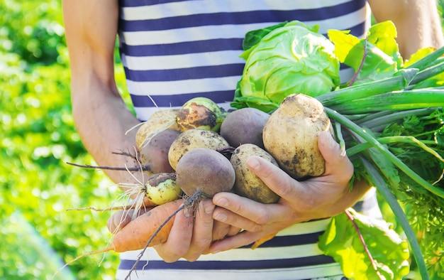 Hortalizas orgánicas caseras en manos de los hombres.