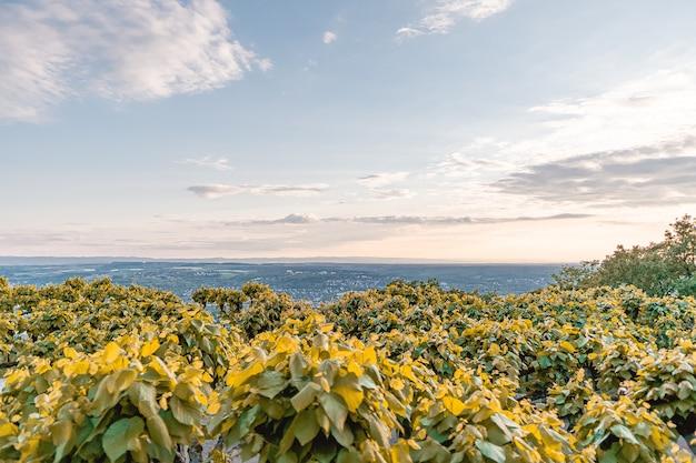 Howth cliffs walk, vista del mar de irlanda