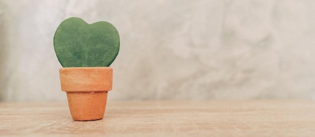 Hoya kerrii craib en maceta y planta en forma de corazón para regalo