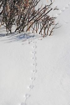 Huellas de animales en la nieve cerca de arbustos.