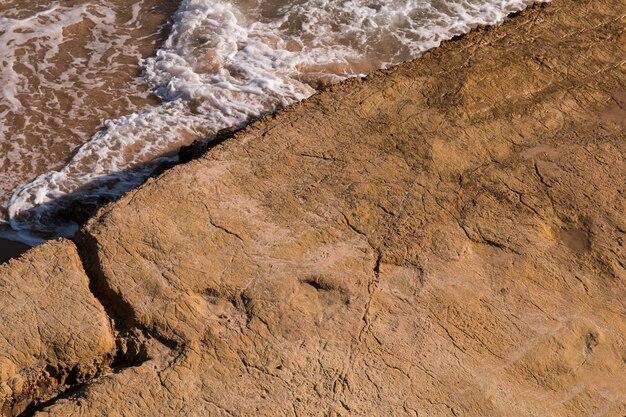 Lobos Perros Siluetas Mamíferos: Huellas De Los Animales De Un Mamífero