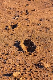 Huellas humanas en tierra seca y agrietada