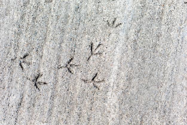 Huellas de un pájaro sobre hormigón de fondo gris.