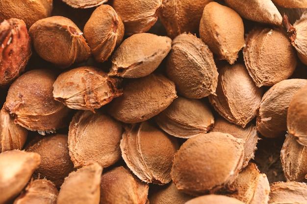 Huesos de albaricoque. las semillas son de rastrojo para la siembra. una semilla de albaricoque