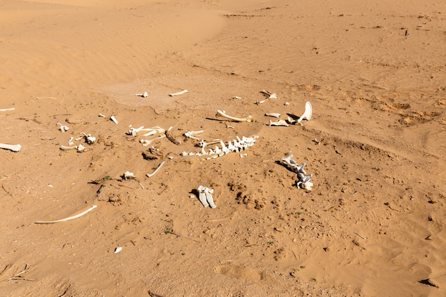 Huesos de un animal en el desierto.