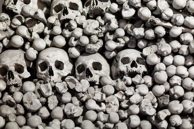 Huesos y cráneos humanos