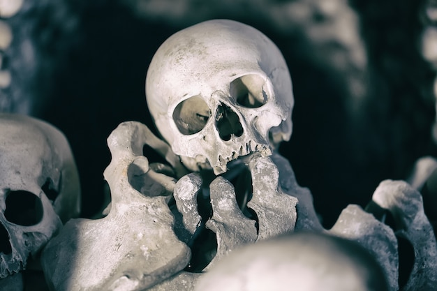 Huesos humanos y cráneos como fondo.