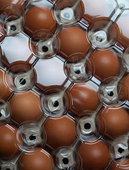 Huevo en bandeja cubierto por plástico iluminado.