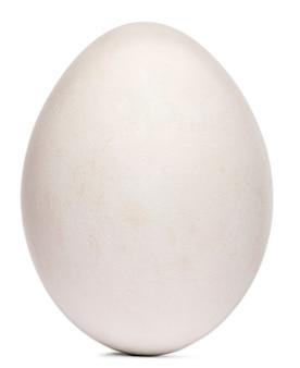 Huevo de buitre leonado gyps fulvus delante de fondo blanco