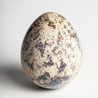 Huevo de codorniz en blanco