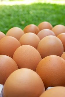 Huevo fresco del primer en la bandeja del papel. ingrediente alimenticio.