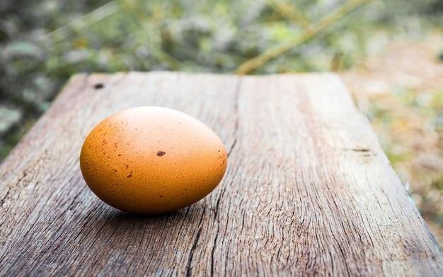 Huevo de oro en el nido