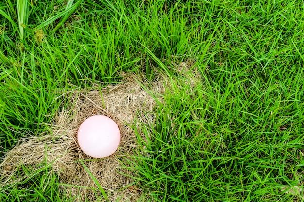 Los huevos de algunos animales se colocan en el heno, cuando la madre salió a buscar comida.