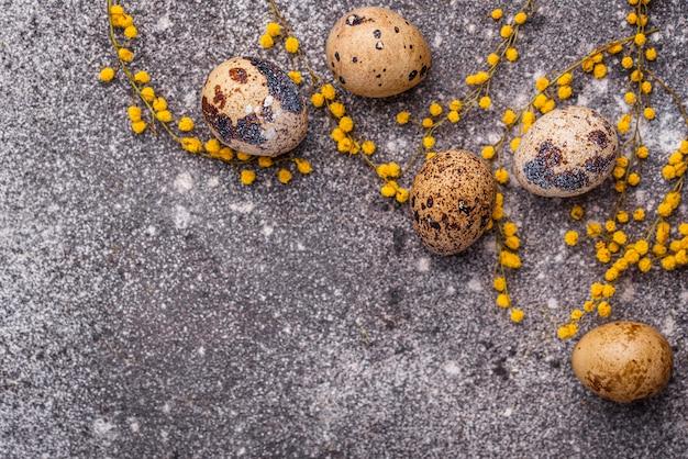 Huevos de codorniz y flores de mimosa