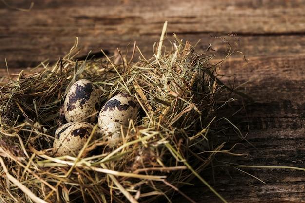 Huevos de codorniz en un nido