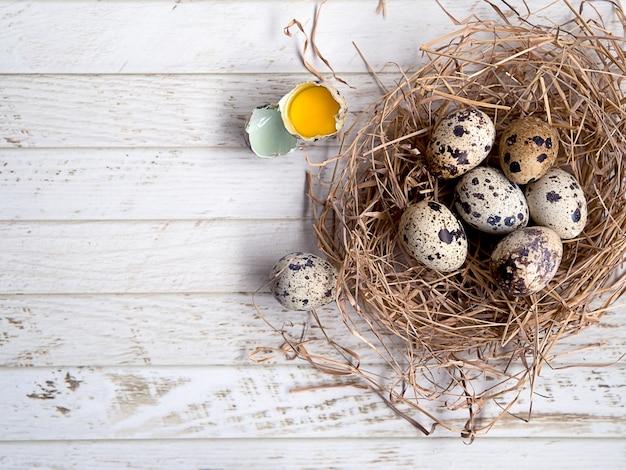 Huevos de codorniz pequeños en el nido de pájaro con cáscara de huevo y yema de huevo agrietada