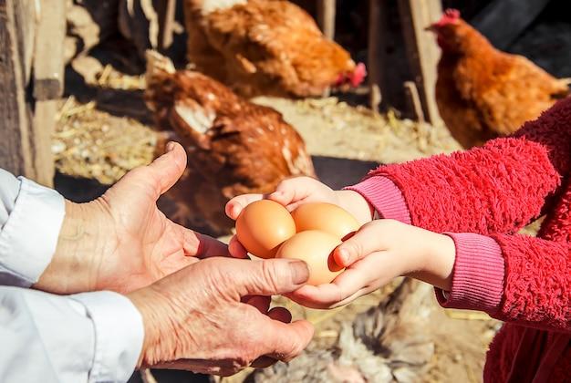 Huevos domésticos de gallina en las manos. enfoque selectivo