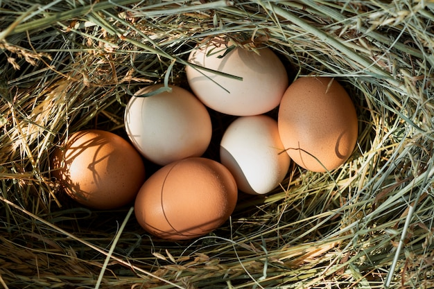 Huevos de gallina en un nido de paja