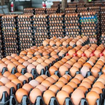Huevos de granja de pollos en el paquete
