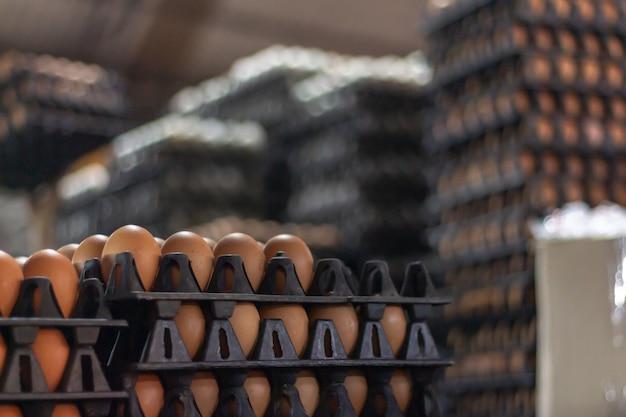 Huevos en el panel de comercio