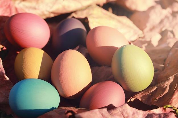 Huevos de pascua coloridos en hojas secas con color vintage.fondo del concepto de pascua.