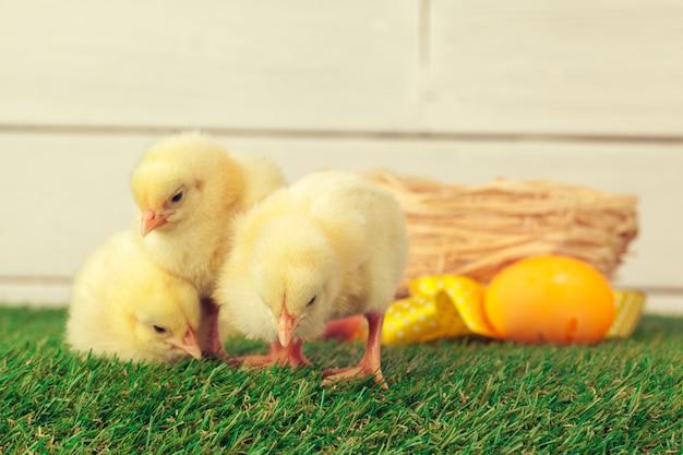 Huevos de pascua y pollos sobre la hierba verde