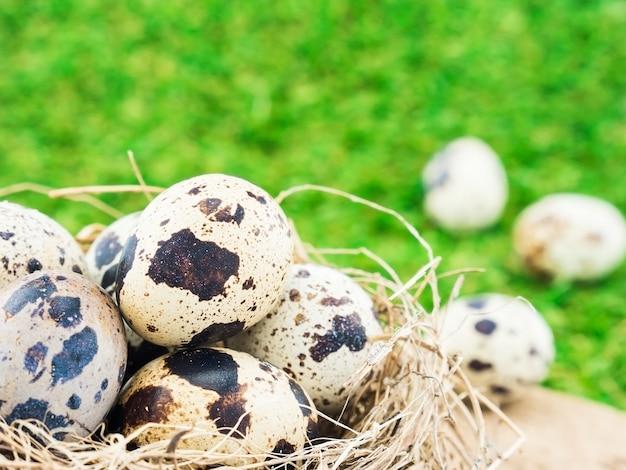 Huevos pequeños en un nido de aves sobre fondo de hierba verde