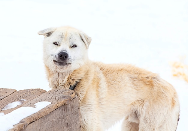 Huskies en guardería para perros
