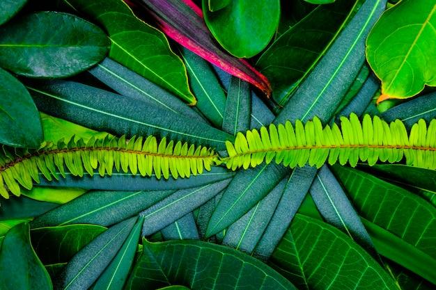Idea creativa del diseño de hojas verdes para el fondo y la textura.