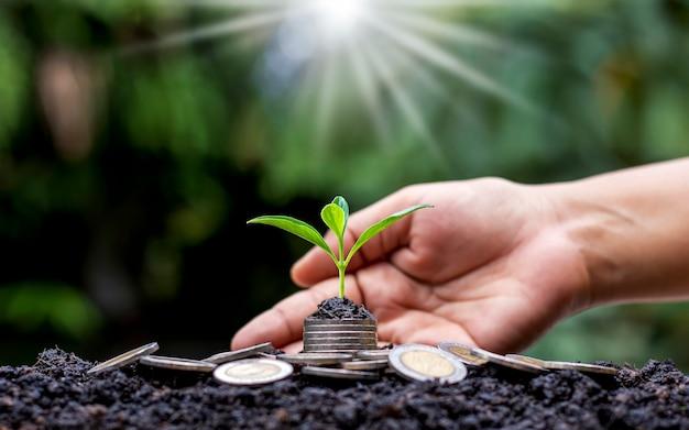 Ideas de inversión financiera y árboles en crecimiento en una pila de dinero y suelo, incluido el fondo de naturaleza verde borrosa.