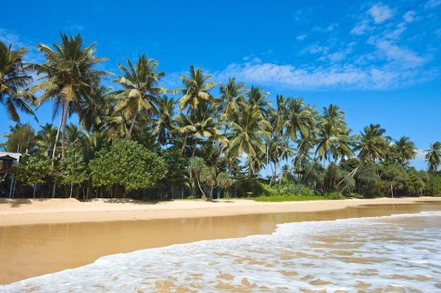 Idílica playa. sri lanka